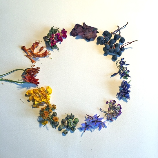 flowerwheeel